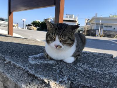 沖縄の大好きを巡る②~南部の海と天ぷらと猫の島♪ただいま☆ホテルムーンビーチ♡-(´ε` )~