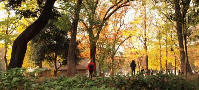 上野恩賜公園 くるっと真ん中辺り♪