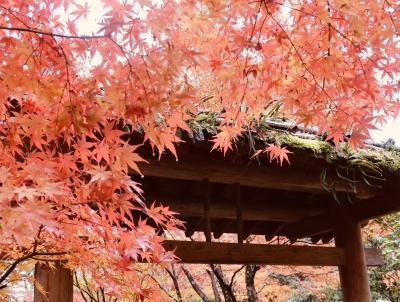 2019年11月 雨に見舞われた東京出張!雨にもマケズ日本三景松島へ!グルメと紅葉を満喫~♪(3日目)