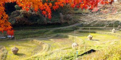 癒しの風景、明日香村『稲渕棚田』