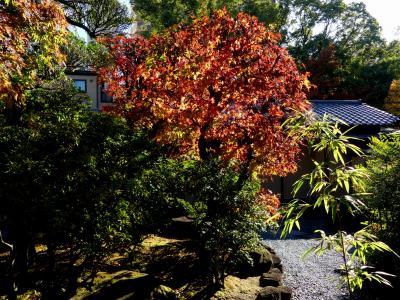 「星渓園」の紅葉_2019_12月3日、紅葉、黄葉、ともに綺麗でした(埼玉県・熊谷市)