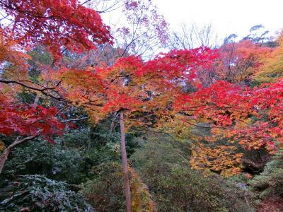 2019年12月 紅葉の京都 青蓮院門跡