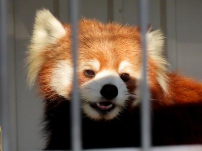 市川市動植物園&千葉市動物公園  移動直前のカリンちゃん&ハルマキちゃん母娘に会いに!! 総計21匹に会いレサ酔いしました(苦笑)