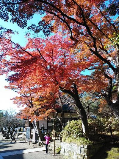 鎌倉2019紅葉 【1】明月院・浄智寺・円覚寺