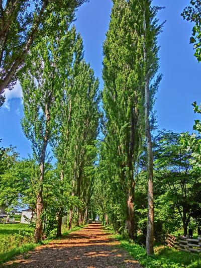 2019夏・青春18きっぷで北海道へ(その9)札幌二日目