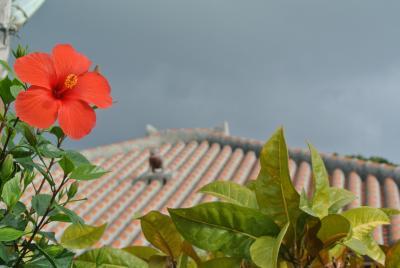 12月に石垣島・竹富島へ 1泊2日でも気分はのんびり旅!(2日目 竹富島に癒されて・・)