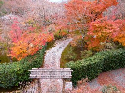 晩秋の京都(紅葉・ライトアップ・おばんざい)