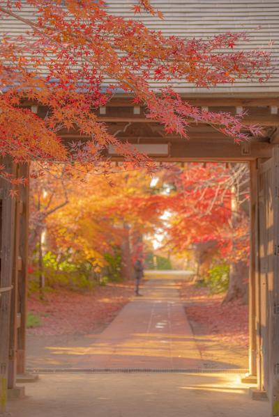 隠れた紅葉の名所・川口市安行紅葉めぐり