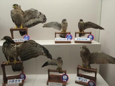 猛禽類保護センターと鳥海山荘
