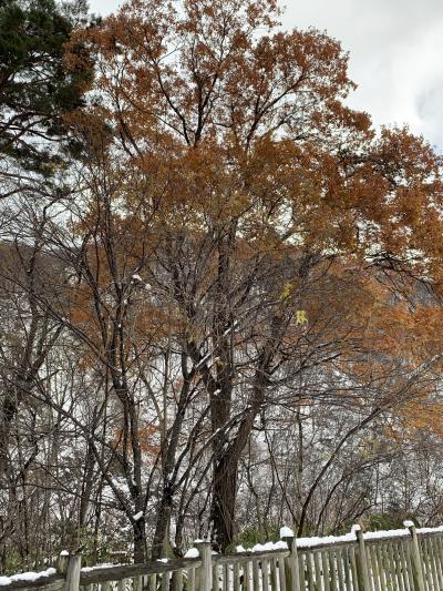 山岳小説でなじみの谷川岳へ。えぇ~?雪?