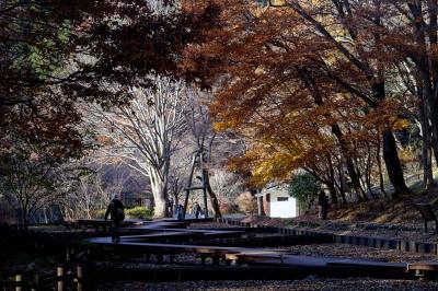 横浜の紅葉 2019 馬場花木園、三ッ池公園、四季の森公園他