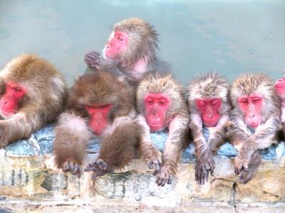猿も温泉でホッコリ(^O^)・・函館熱帯植物園
