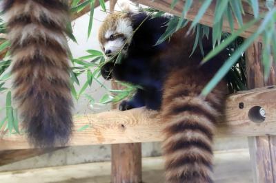 黄葉彩る12月の埼玉こども動物自然公園(前編)珍しいウスイロホソオクモネズミの赤ちゃんかろうじて&園長さんによる今年生まれの動物の赤ちゃん話