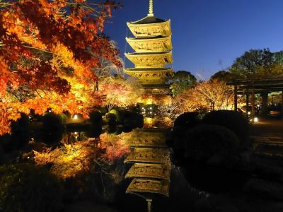 2019冬 東寺で紅葉ライトアップ