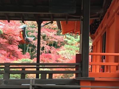 5泊6日京都、奈良、紅葉の旅