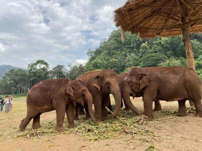 タイの自然を満喫 アクティビティ盛り沢山の旅(その1:エレファントネイチャーパーク)