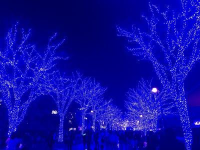 2019年12月 イルミネーション 青の洞窟と東京タワー&新宿サザンテラス