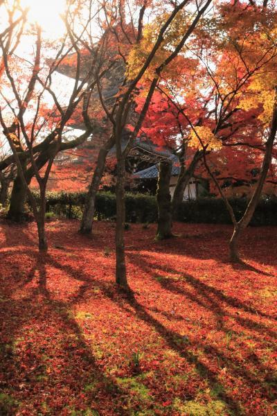 三井ガーデンホテル新町別邸に泊る5日間♪ 暮らすように旅をした晩秋の京都♪ 4日目真如堂から哲学の道を経て南禅寺
