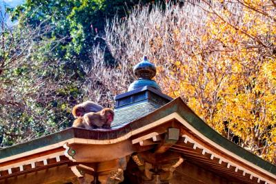 高崎山自然動物園の紅葉 2019