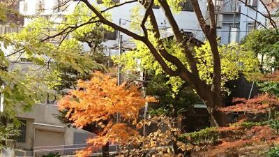 秋ー赤羽スポーツの森公園と赤羽自然観察公園