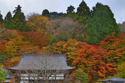 関西紅葉の旅