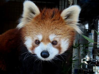羽村市動物公園&甲府市遊亀公園附属動物園 輝きを取り戻したクゥちゃん!! 園とスタッフさんの努力に感謝です
