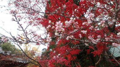 京都紅葉八景(3)赤山禅院