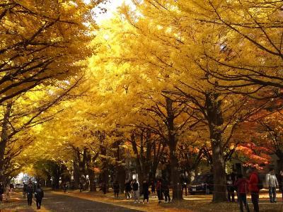 紅葉の札幌・小樽を歩く