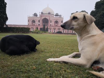 ニューデリー In India 最後