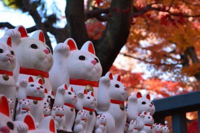 チャリでめぐる紅葉狩り 東京でもきれいな紅葉が見れるじゃん! 招き猫の豪徳寺編