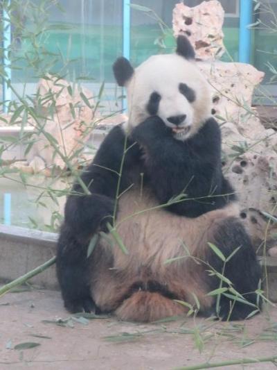 中国 「行った所・見た所」 天津のパンダがいる天津動物園を見物しました