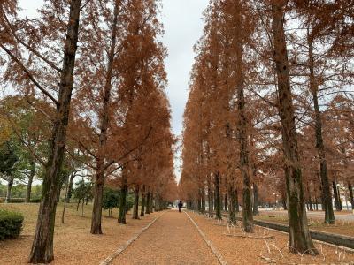 初冬の花博・鶴見緑地はひなびた散歩にぴったり