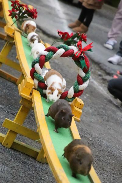 クリスマスリースのお帰り橋の智光山公園こども動物園~こちらもゆず湯カピバラ&総勢8頭のコツメカワウソ大活躍&来年の干支のカレンダーゲット