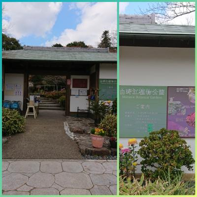 終わりかけの紅葉を見に白野江植物公園へ ☆。・:*:・゚'☆,。・:*: