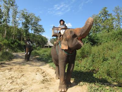 ラッキー!象乗り体験ができました!象は穏やかで賢い! ~ ルアンパバーン ラオス ~ 2019