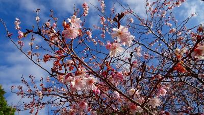西宮市 北山緑化植物園へ花見に 上巻。