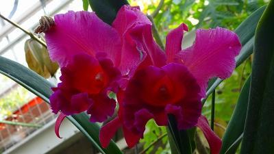 西宮市 北山緑化植物園へ花見に 中巻。
