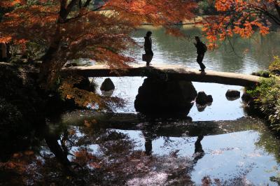 ◎六義園、散り紅葉