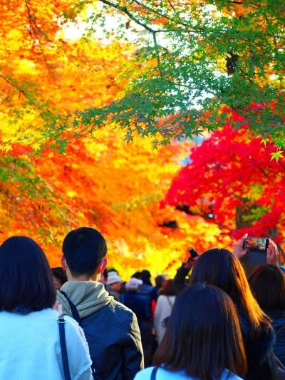 東京の紅葉巡り神宮外苑・浜離宮恩賜庭園・九品仏浄真寺