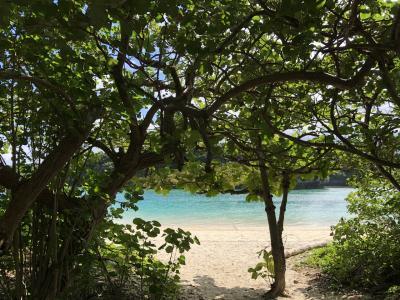 年末年始 おひとりさま、今年も暖かくなりたくて南の島へ 2日目 石垣島で海岸乗馬と島内ドライブ