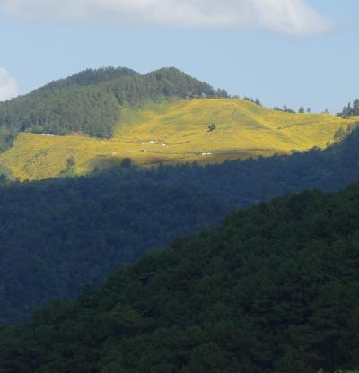 北タイの旅【6】メーホンソン~メソート☆ドイ.メー.ウ.コー『オ!ゥオー!山の斜面が黄色の花』