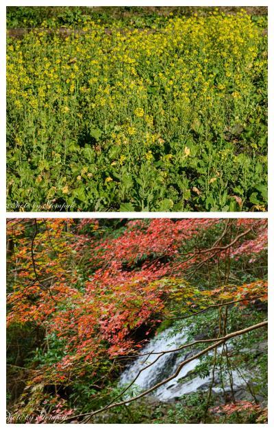 老人ホーム慰問のついでに南伊豆一泊旅行(1)南伊豆は春と秋が同居していた!