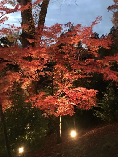 2019年12月  【紅葉がみたくて 京都】へ ひとり旅