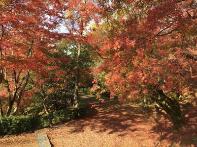 2019年 京都へ紅葉を見に気ままにぶらり旅