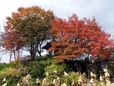 「常楽寺」の紅葉_2019_11月25日、わずかに残ってはいましたが、見頃は過ぎていました(群馬県・太田市)