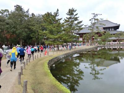 奈良マラソン2019 10キロコース出場とフルマラソン応援