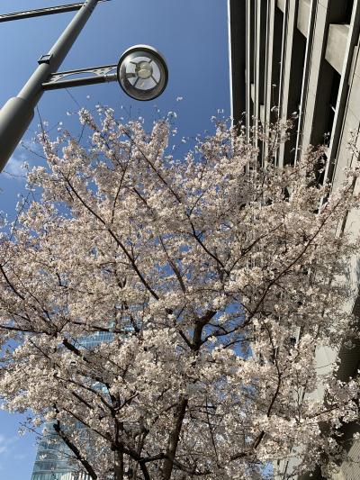 浦賀から東京お花見ツアー