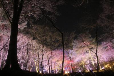 車で巡る歳末レッサーパンダとイルミネーション(後編)森林公園の「光と森のストーリー」~森林を活かした素晴らしいイルミネーションに感動