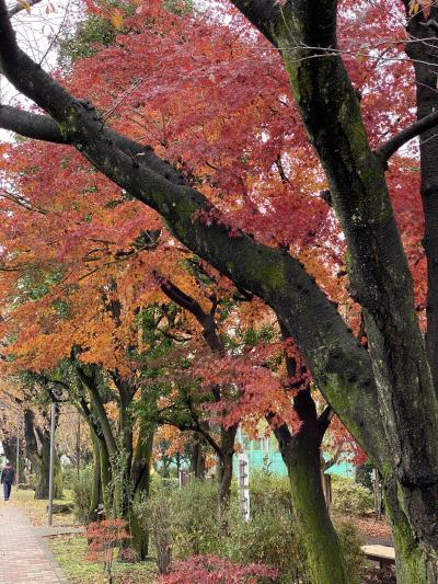 ウオーキングをしながら見た紅葉の移り変わり10月から12月まで
