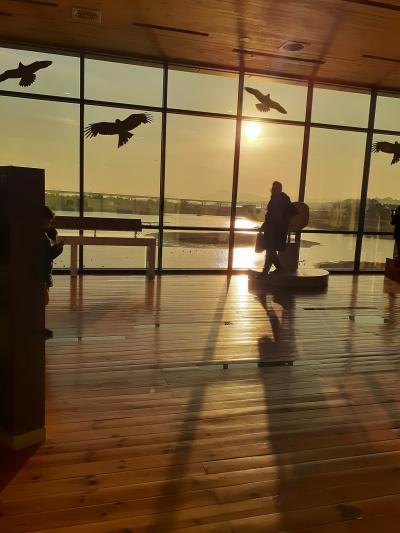 釜山冬旅1日目 渡り鳥や夕陽に感動の旅